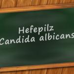 Der Hefepilz Candida albicans
